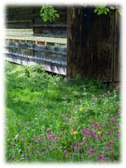 Bienenstand der Bioland-Imkerei Alte Werkstatt